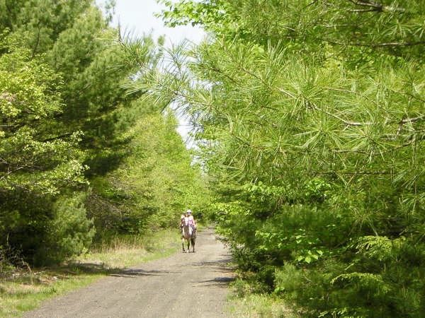 Horseback Rider on path in woods